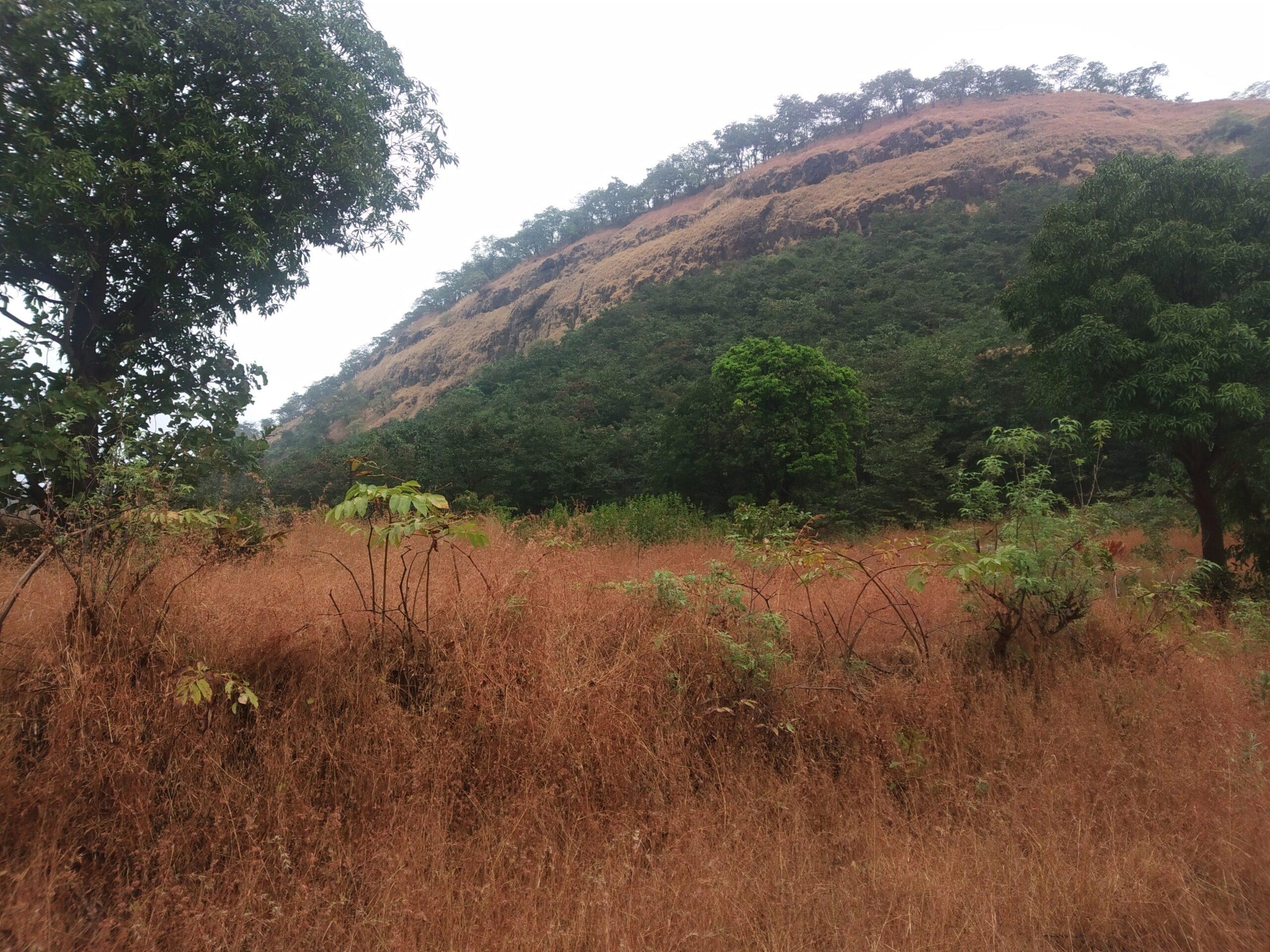 mountain in konkan